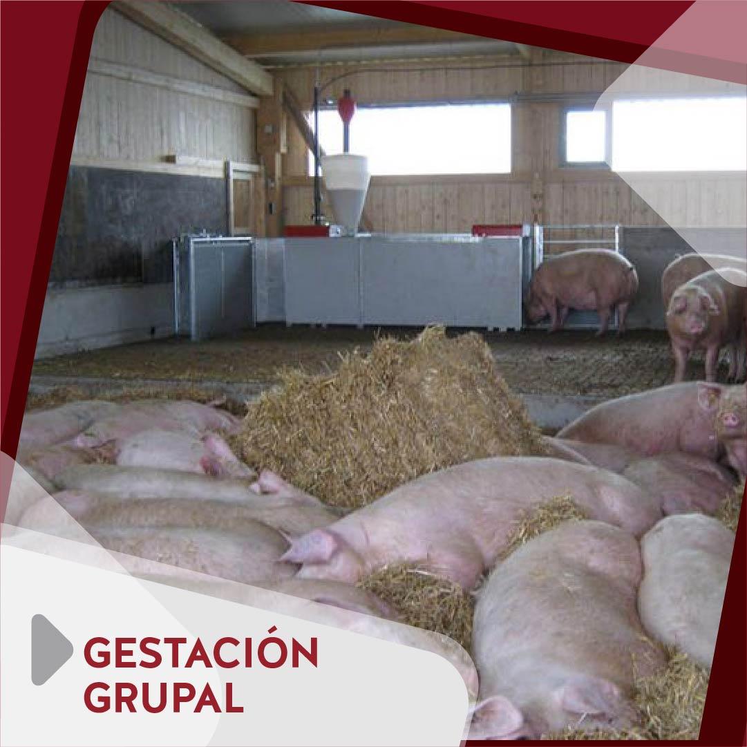 Gestación Grupal